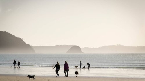 Covid-19 Delta outbreak: Hibiscus Coast resident reportedly tests positive for virus - NZ Herald