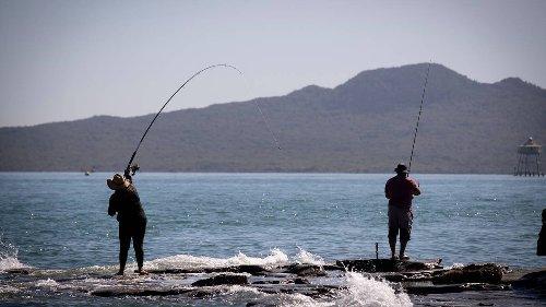 Fishing restrictions and new protection areas for Hauraki Gulf/Tīkapa Moana - NZ Herald