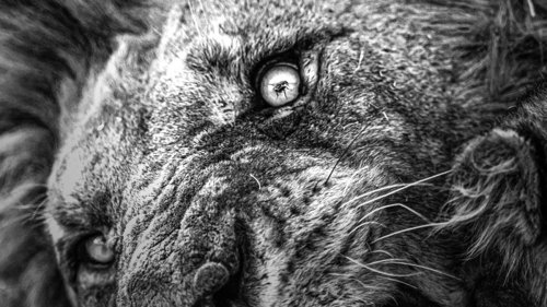 Lion's eye image wins Photographer of the year Africa Geographic - NZ Herald