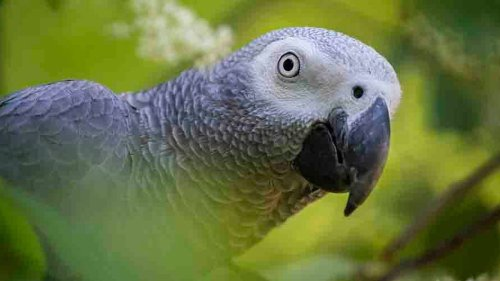 Five parrots separated at UK zoo after encouraging each other to swear at guests - NZ Herald