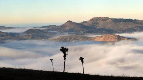 Otago fog disrupts flights, fishing vessels - NZ Herald