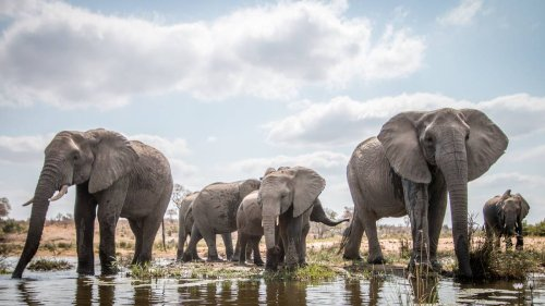 Suspected poacher 'stomped to death' by elephant in South Africa - NZ Herald