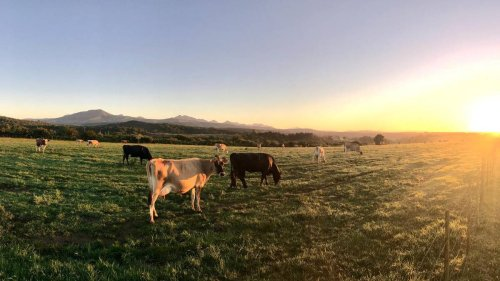 Solid boost for Global Dairy Trade auction overnight - NZ Herald