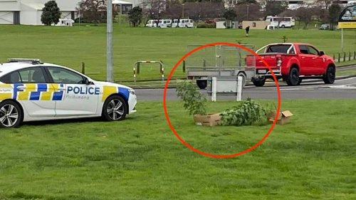 Cannabis dumped in middle of Whanganui roundabout - NZ Herald