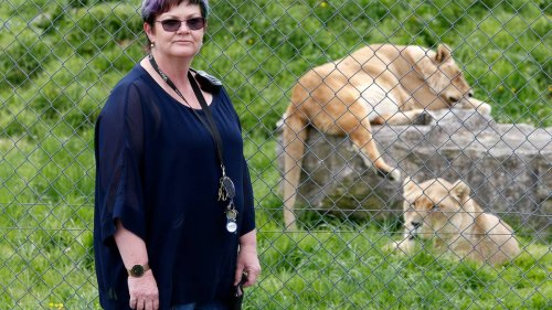 Lives of Whangārei's big cats hang in the balance after $9m spent and seven years of hard work - NZ Herald
