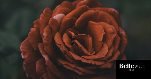 Toffee Rose: Wieso gerade alle diese Blume lieben