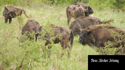Rewilding: zurück zur Natur