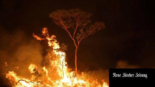 Der Amazonasregenwald in Brasilien verschwindet weiter im Rekordtempo