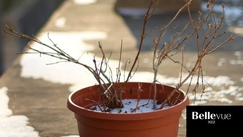 Balkonpflanzen richtig überwintern – das gilt es zu beachten