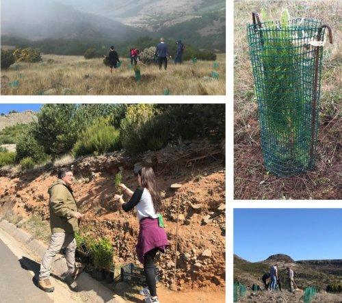Plant the Future Madeira – Plantar o Futuro