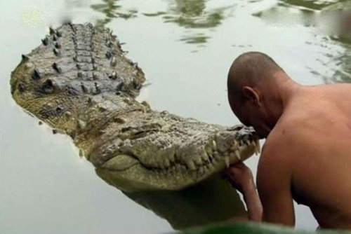 This Indian Temple Is Home to a 'Vegetarian' Crocodile