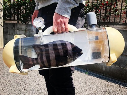 Want to Take Your Pet Fish for a Walk? There's a Bag for That!