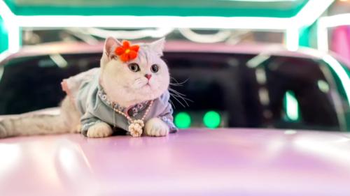 Meet Mao Mao, a Feline Car Model That Earns More Than Most Humans