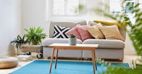 Green Up Your Home With this Cool, and Affordable, Online Plant Company