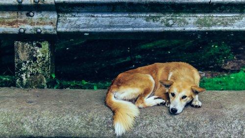 Unglaubliche Reise: Hund wird nach 7 Jahren 1.000 Meilen weit von Zuhause wiedergefunden