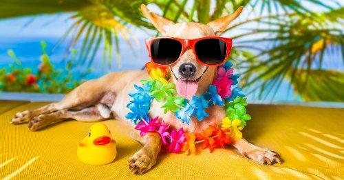 Hitzewelle: Das sollte jeder Haustierbesitzer wissen