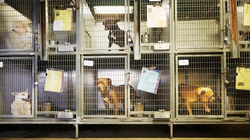 Corona-Haustiere: Jetzt trifft ein, wovor Tierschützer:innen schon lange gewarnt haben