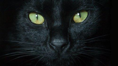Stunden nach Einäscherung der Katze: Familie kann nicht glauben, als sie plötzlich wieder vor der Tür steht
