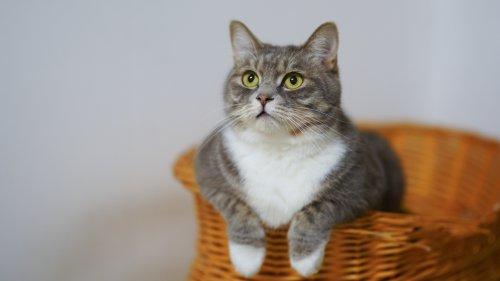 Charakterzüge von Katzen: Diese 5 Persönlichkeitstypen gibt es