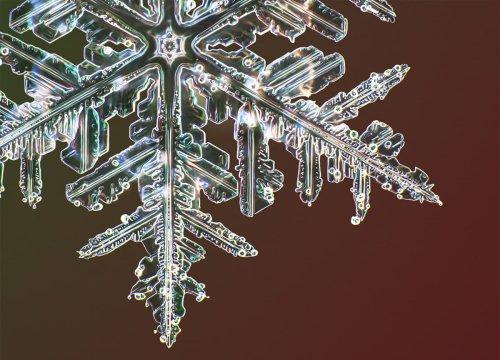 Fotografía de ultra alta resolución revela microscópicos detalles de los cristales de nieve | Fotografía