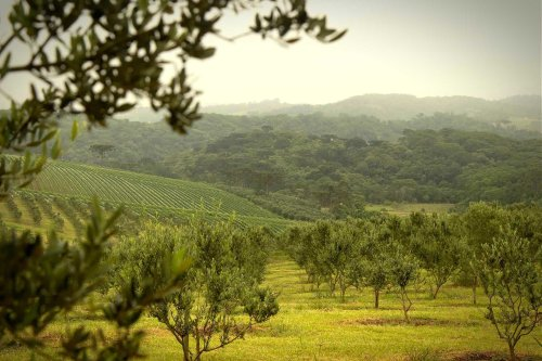Renewed Focus on Quality Pays Off for Brazilian Producers at 2021 NYIOOC