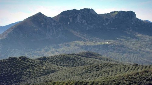 Andalusian Cooperative Crafts Award-Winning Olive Oil With Soul