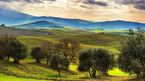 Italian Agriculture Fell in 2020, Olive Oil Sector Hit Hardest, Report Finds