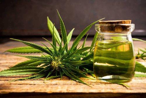 L'huile de chanvre : l'une des huiles végétales les plus nourrissantes pour les cheveux | Ô Magazine