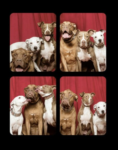 OMG, WOOF! Photographer built a special photobooth for dogs and captures their reactions | OMG.BLOG