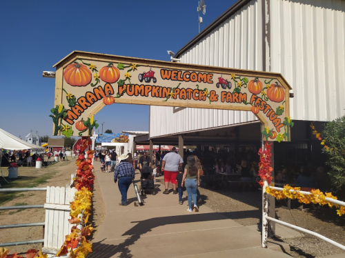 Pick Pumpkins For Just 50 Cents A Pound This Fall At The Marana Pumpkin Patch In Arizona