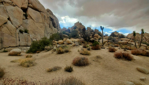 Visit Southern California's Joshua Tree National Park For Seven Days Of Scenic Experience You Didn't Know You Needed