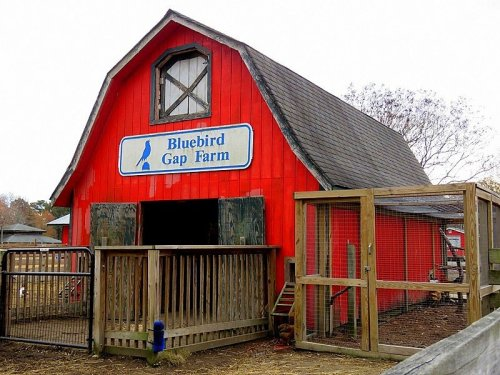 Admission-Free, The Bluebird Gap Farm In Virginia Is The Perfect Day Trip Destination
