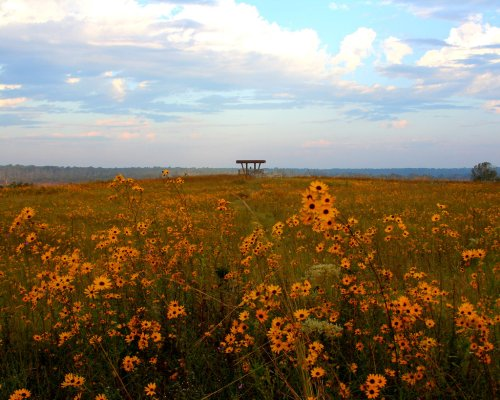 The Magnificent Morgan Hill Prairie Trail In Mississippi Will Lead You To A Hidden Overlook