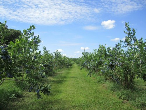 7 Delightful Farms In Indiana Where You Can Pick Your Own Food