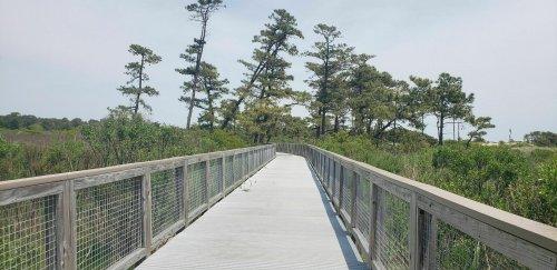Walk Or Ride Alongside The Ocean On The 5.2-Mile Gordons Pond Trail In Delaware
