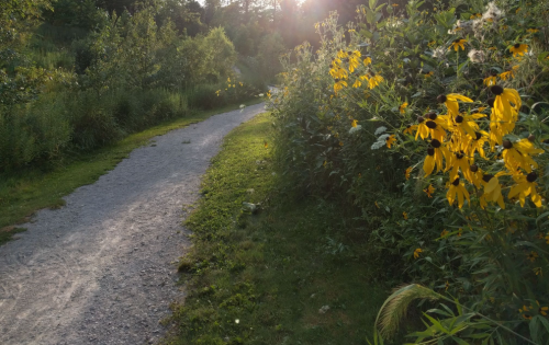 Mcintosh Loop Trail Near Cleveland Leads To A Magnificent Hidden Oasis