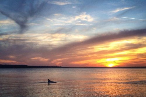 Take A One-Of-A-Kind Sunset And Fireworks Dolphin Tour In South Carolina