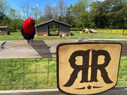Tour North Carolina's Rescue Ranch For Animal Encounters With Critters From A Variety Of Species