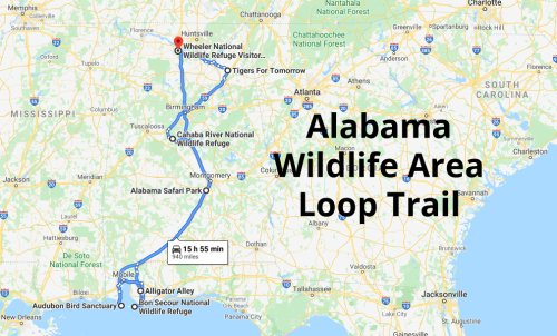 Discover 7 Of Alabama's Best Wildlife Areas While On This Loop Trail