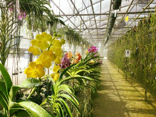 Visit The Stunning R.F. Orchids, The Oldest Most Prestigious Orchid Farm In South Florida