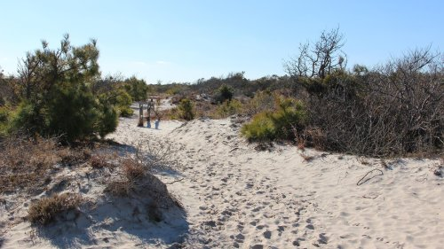 Follow A Sandy Path Along This Trail When You Visit Assateague Island National Seashore In Maryland