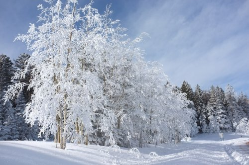 Get Ready To Bundle Up, The Farmer's Almanac is Predicting Freezing Cold Temperatures This Winter In New Mexico