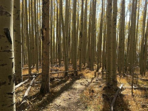 Spend The Day In Thick Aspen Trees On This Steep But Short Trail In New Mexico