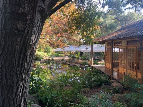 Sip On Jasmine Tea And Relax By The Koi Pond At This Peaceful Japanese Tea Garden In Southern California