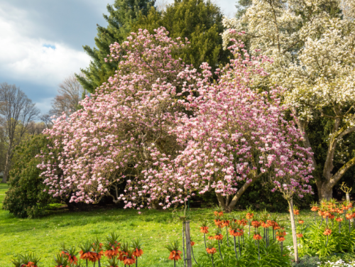 7 Great Landscaping Trees and When You Should Plant Them (Hint: It's Soon)