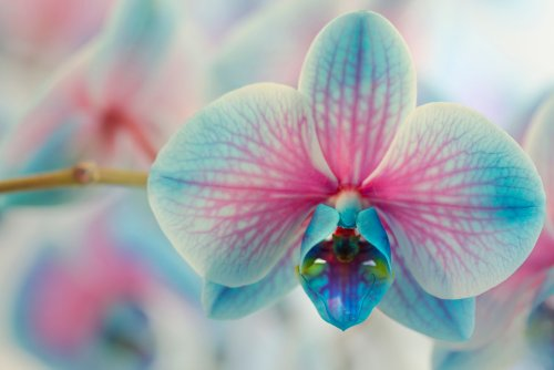 8 Popular Types of Orchids (And How To Care For Them)