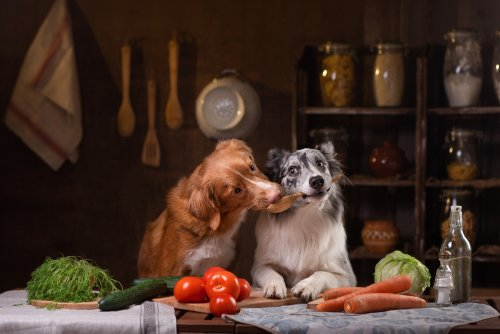 The Farmer's Dog, Farm to Dog Bowl: Is it Worth It?