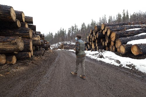 Arborists say ODOT post-fires tree cutting is excessive, rushed