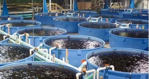 How to start Fish Farming business in Nigeria