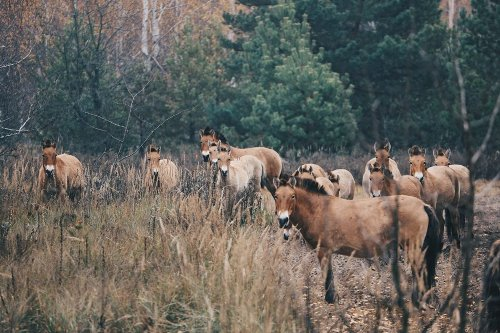 Chernobyl continues to be an unexpected wildlife sanctuary | The Optimist Daily